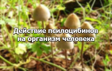 Действие галлюциногенных грибов